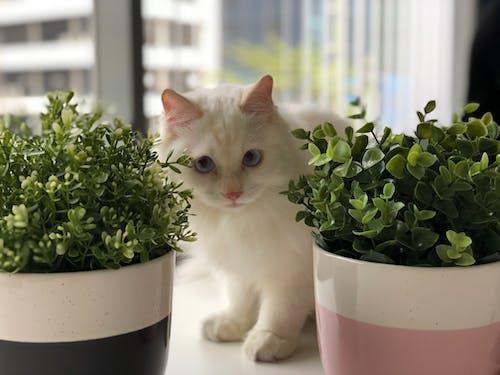 Základová fotografie zdarma na téma bílá kočka, domácí mazlíčci, rostlina, zvíře