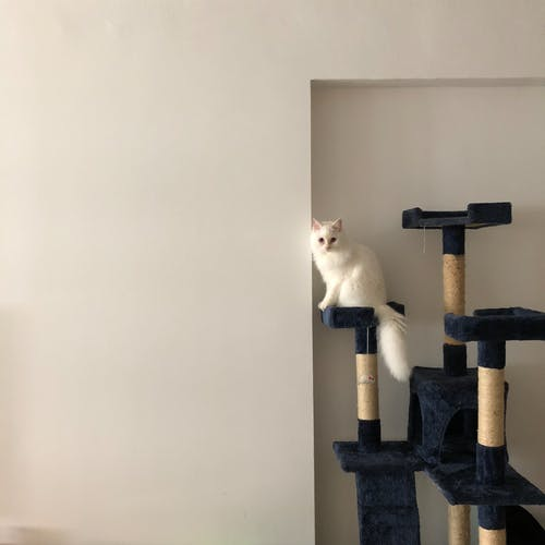 Základová fotografie zdarma na téma bílá kočka, cat condo, domácí interiér, kočičí věž