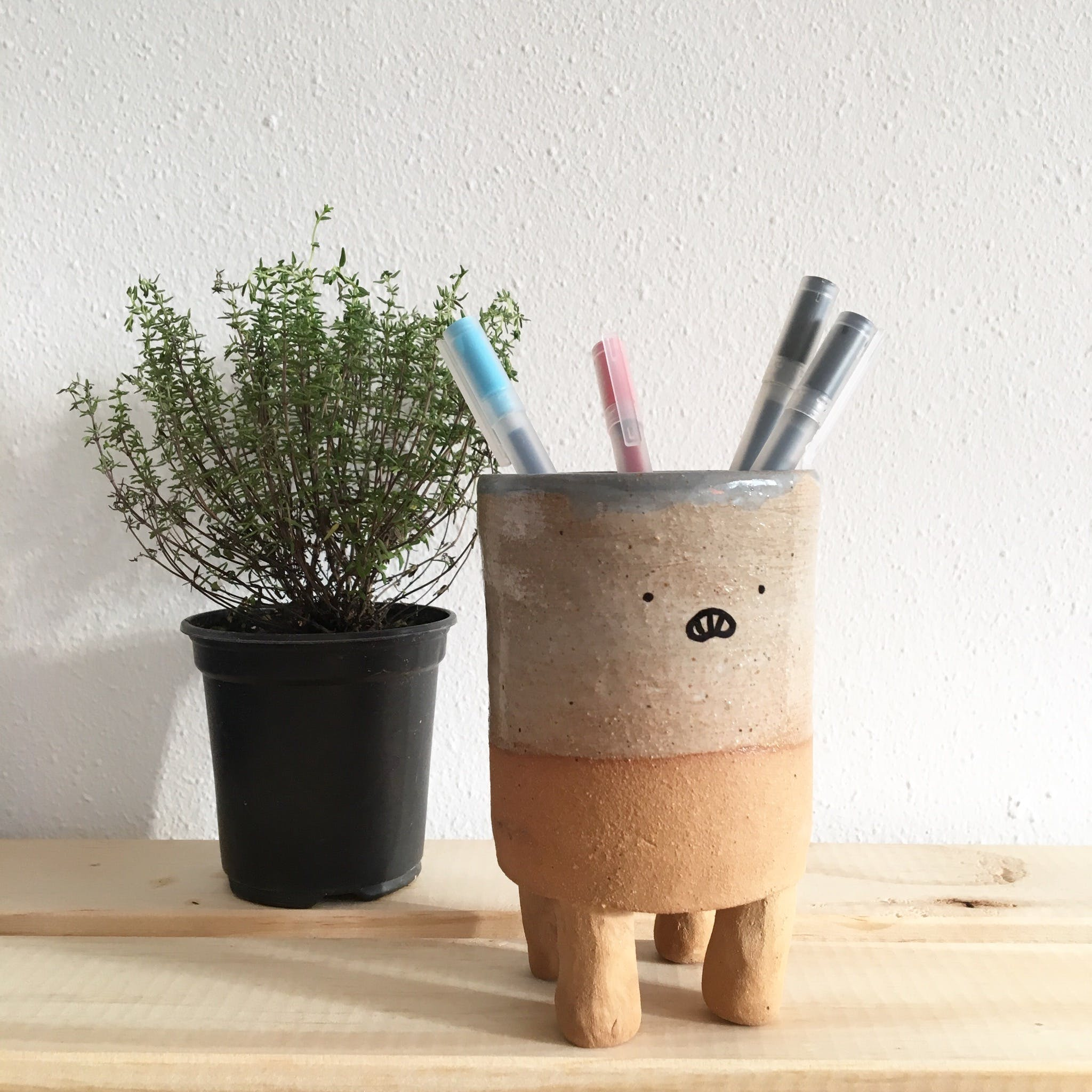 Free stock photo of plant, pot, potted plant, stationery