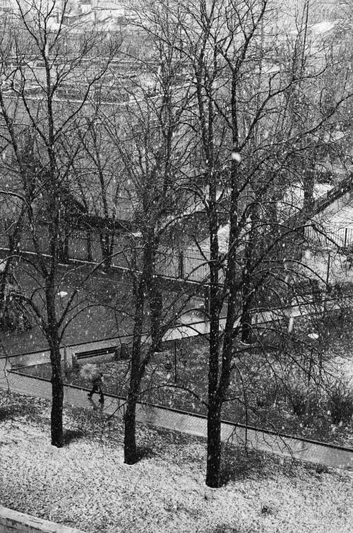 A High Angle View of Trees During Winter