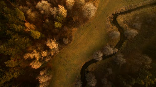 Top View Photography Of Grass Field And Trees