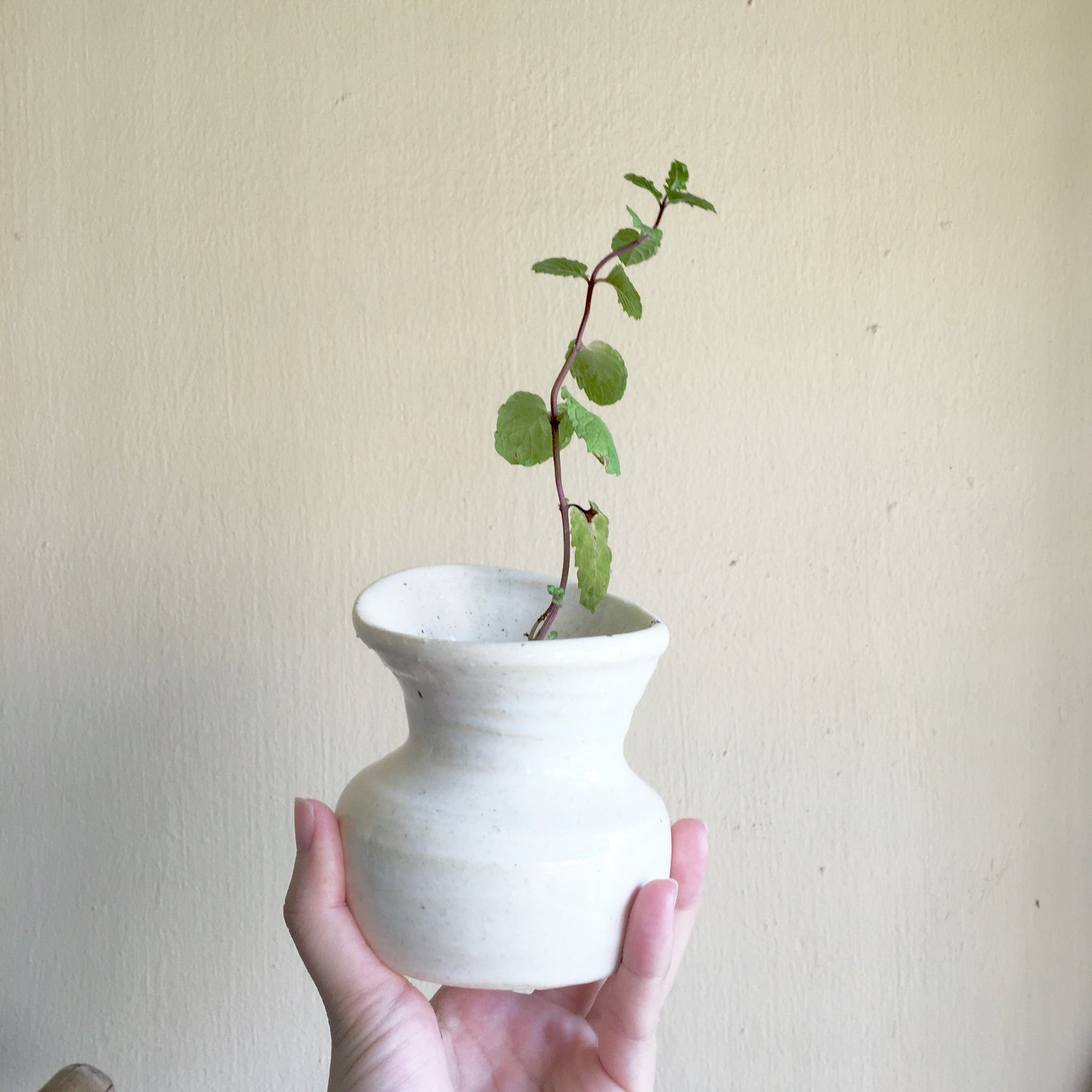 Free stock photo of ceramic, handmade, peppermint, plant