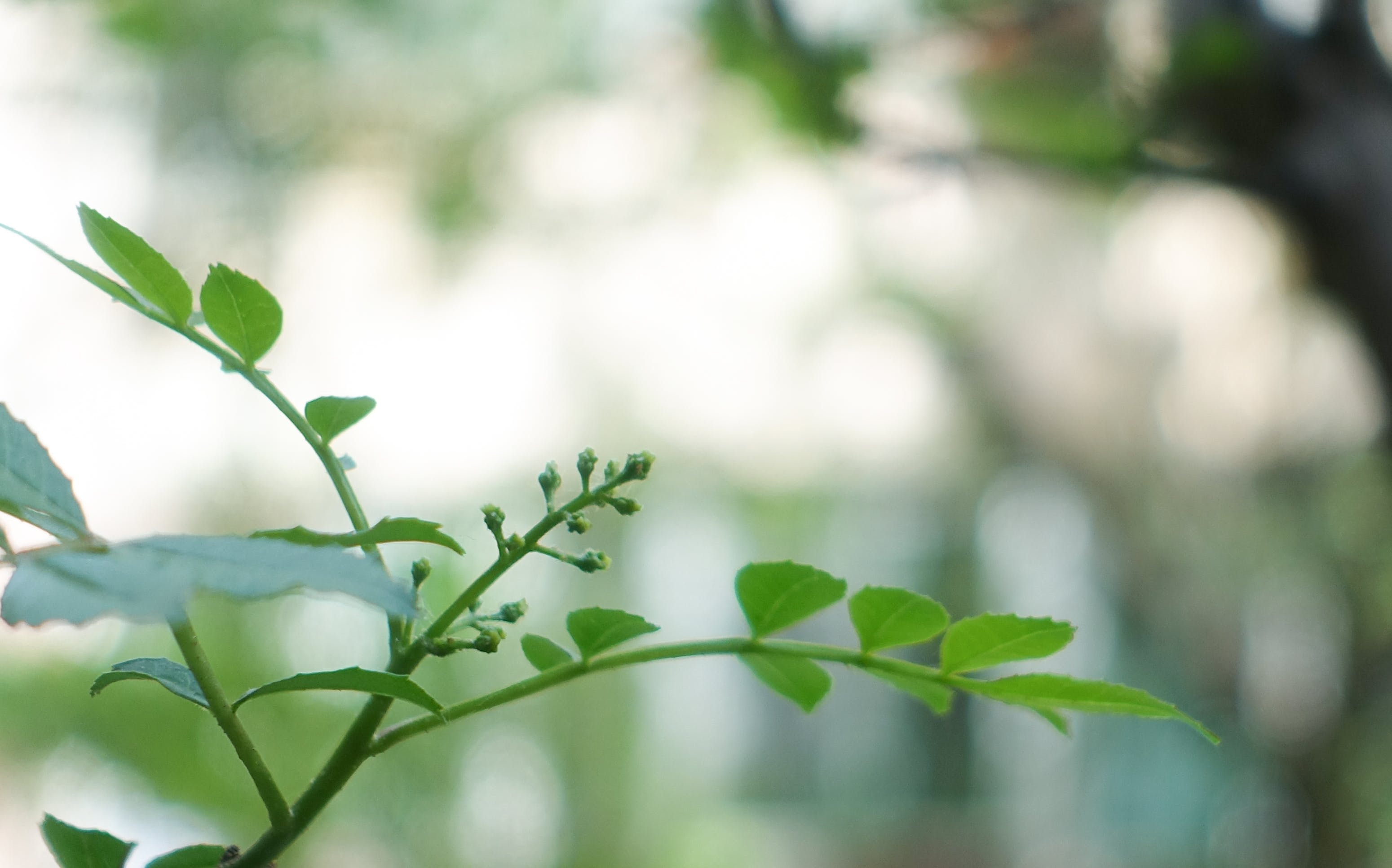 Free stock photo of spring, green