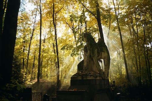 Immagine gratuita di alba, angelo, cimitero