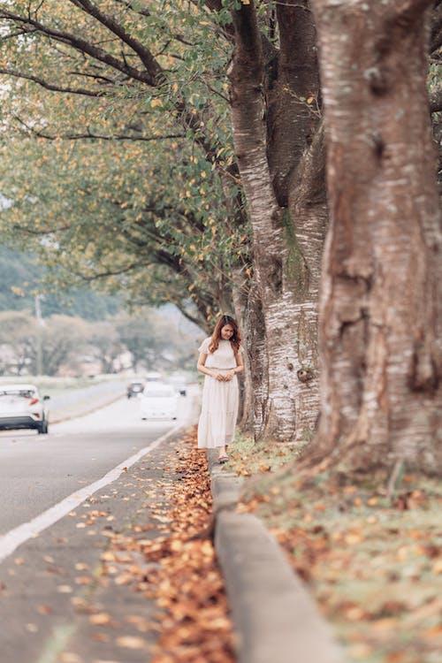 걷고 있는, 나무, 내리막 길의 무료 스톡 사진