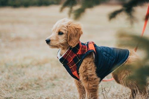 Ingyenes stockfotó állat, állati témák, aranyos kutya témában