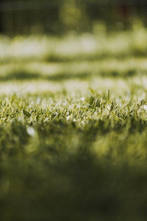 Безкоштовне стокове фото на тему «абстрактний, впритул, газон»