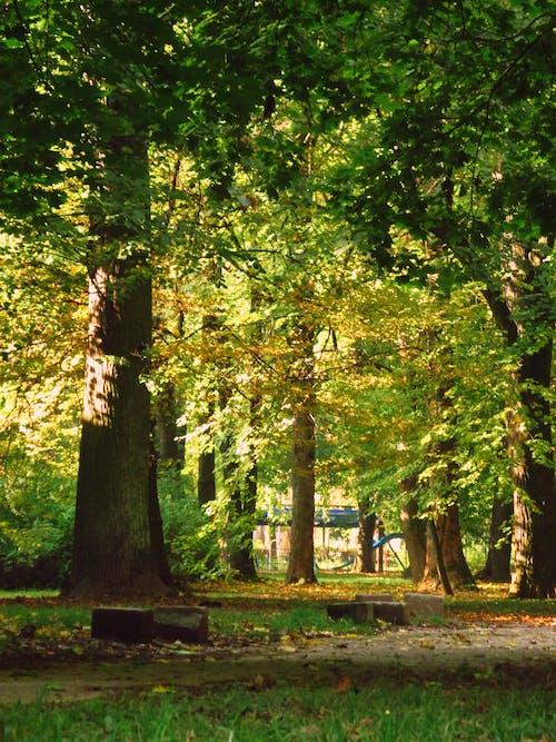 Gratis arkivbilde med gress, grønn, park
