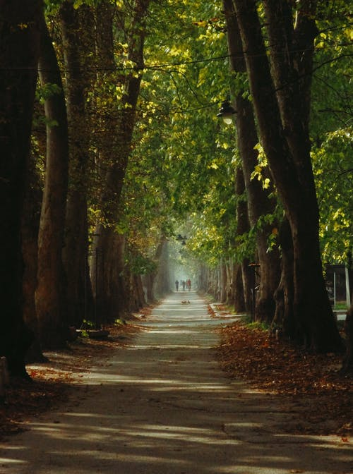 Ingyenes stockfotó erdő, fa, fák témában