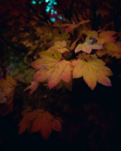 Gratis arkivbilde med abstrakt, blad, blader