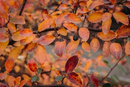 가을, 가지, 나무의 무료 스톡 사진