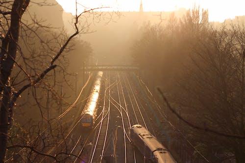 คลังภาพถ่ายฟรี ของ trainline, ต้นไม้, ตะวันลับฟ้า, ทางรถไฟ