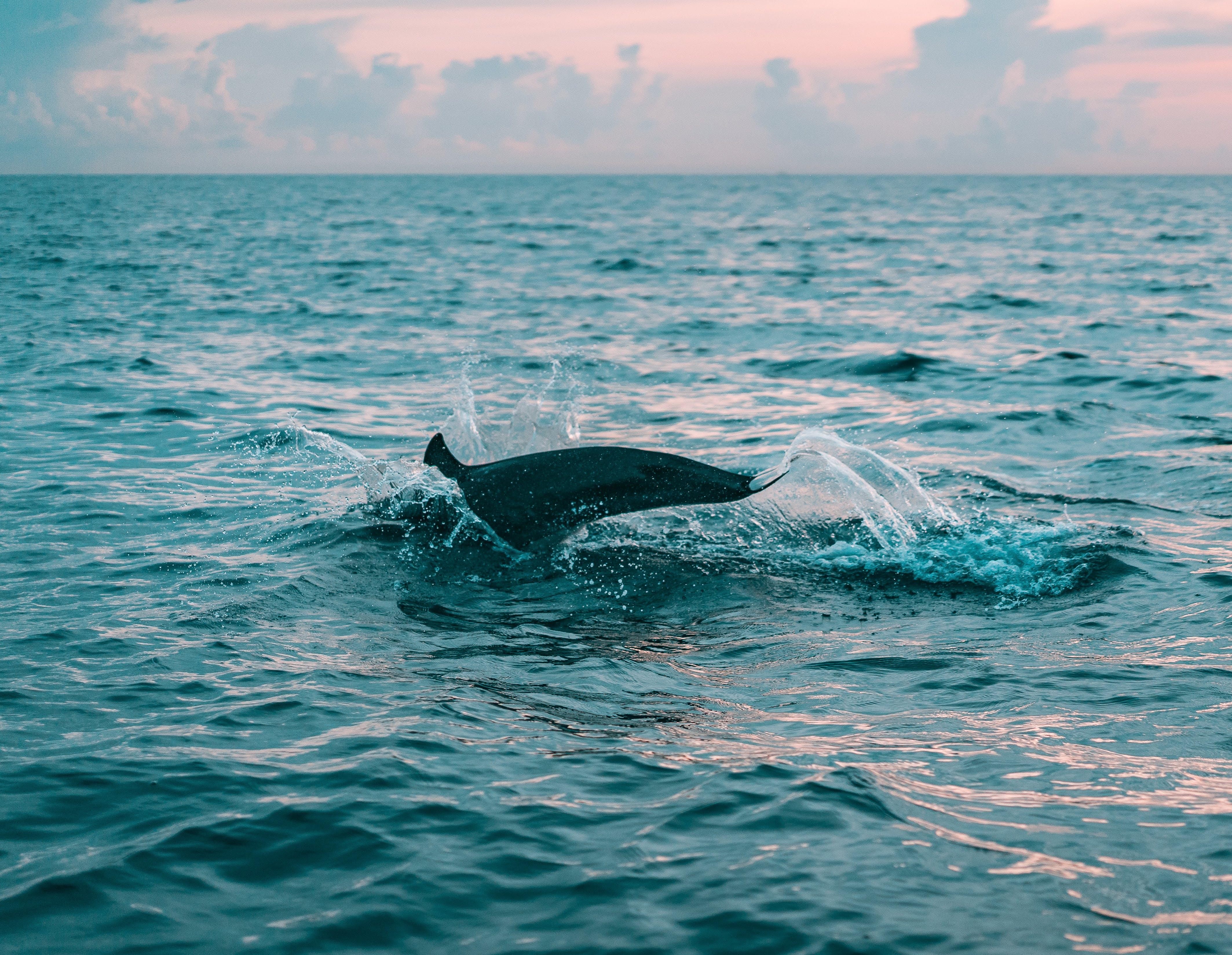 しぶき, イルカ, シースケープ, ダイビングの無料の写真素材