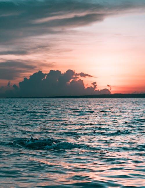 Безкоштовне стокове фото на тему «вечір, вода, дельфін, Захід сонця»