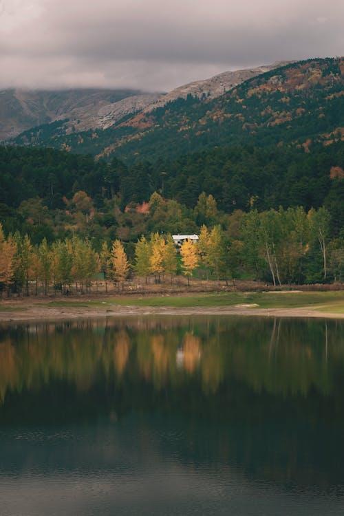 Imagine de stoc gratuită din acoperit de nori, codru, frumusețe în natură