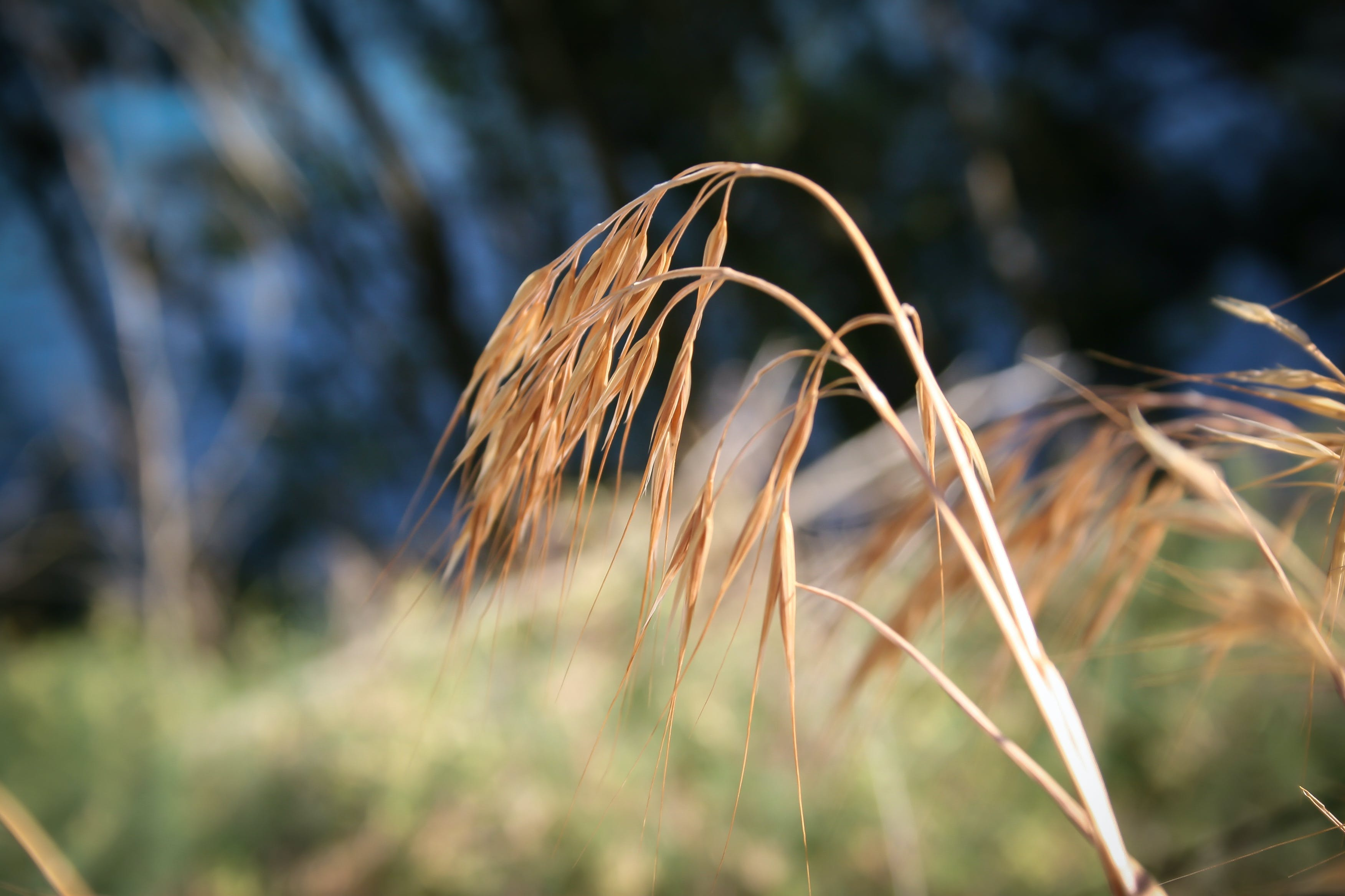 Free stock photo of grass, nature