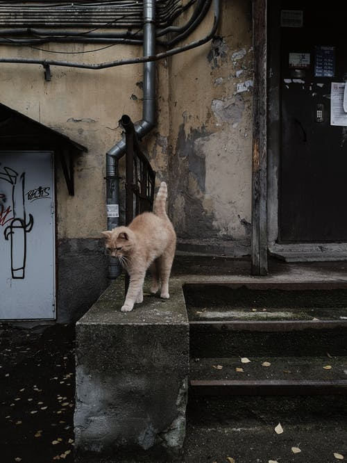 Foto d'estoc gratuïta de abandonat, adult, amant del gat