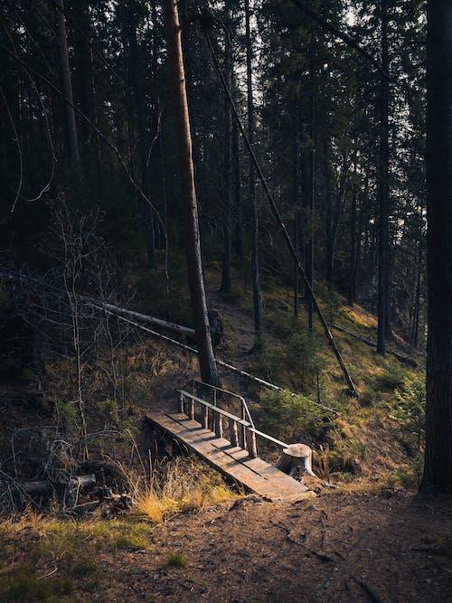 Ingyenes stockfotó erdő, fa, fából készült témában
