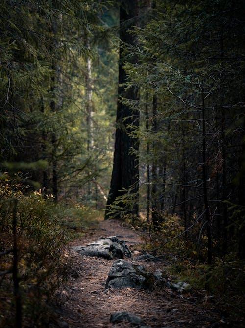 Ingyenes stockfotó erdő, fa, fatörzs témában
