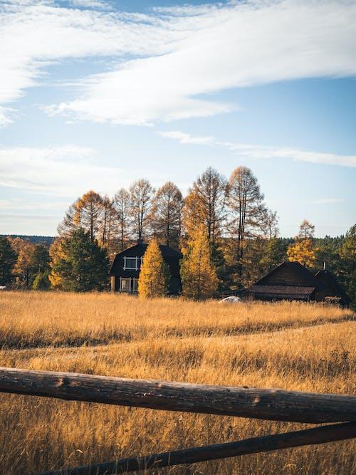 Ảnh lưu trữ miễn phí về căn nhà, cánh đồng, cây