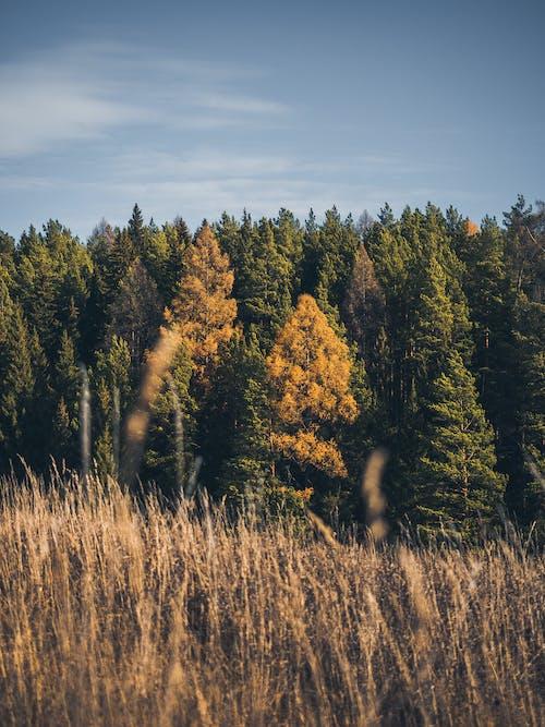 Бесплатное стоковое фото с дерево, живописные, завод