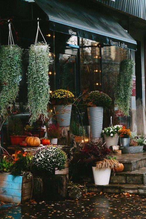 Immagine gratuita di autunno, decorazione, esterno