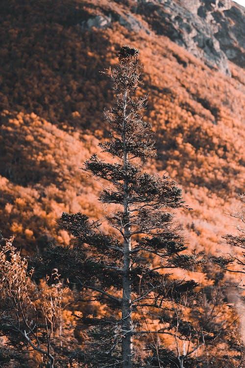 Безкоштовне стокове фото на тему «Деревина, дерево, Захід сонця»
