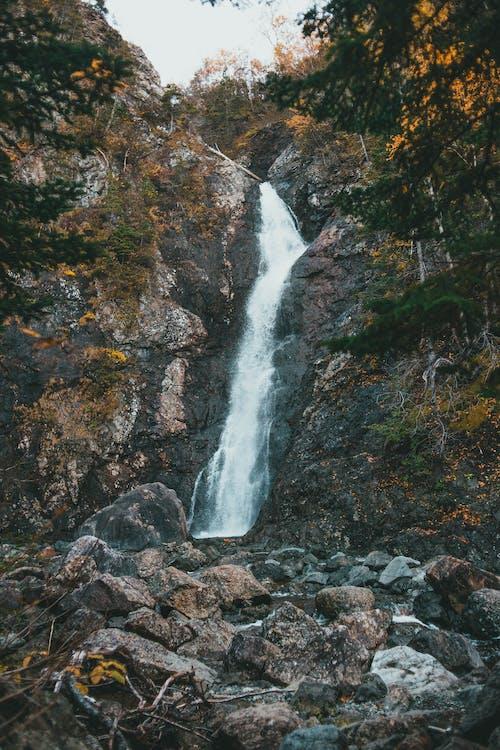 Безкоштовне стокове фото на тему «Водоспад, дерево, еродований»