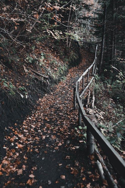 Ingyenes stockfotó akadály, elesett, erdő témában