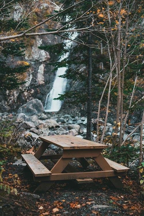 Безкоштовне стокове фото на тему «Водоспад, дерево, камінь»