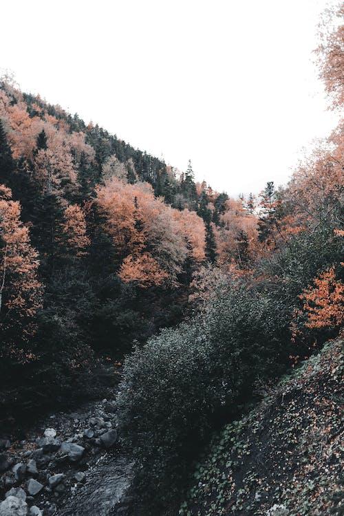 Безкоштовне стокове фото на тему «гора, Деревина, дерево»