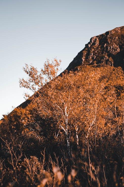Gratis stockfoto met berk, boom, buiten