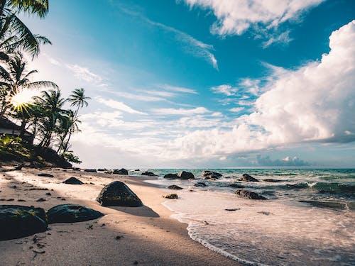 คลังภาพถ่ายฟรี ของ กลางแจ้ง, ชายหาด, ต้นปาล์ม, ตอนกลางวัน