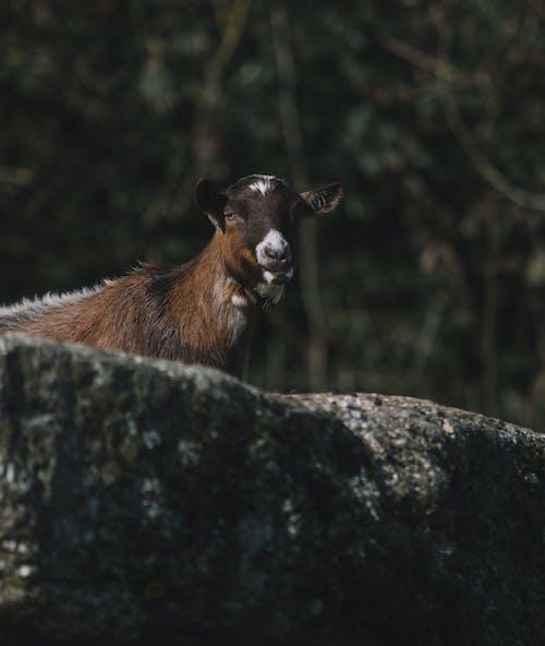 Immagine gratuita di albero, animale, bestiame