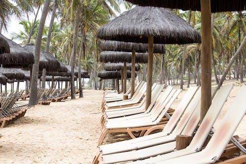 allinclusive, 假期, 沙灘椅, 海灘 的 免费素材照片