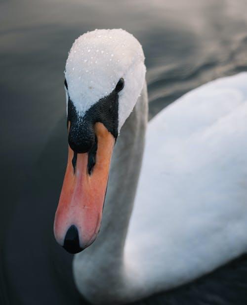 Immagine gratuita di animale, becco, bellezza nella natura