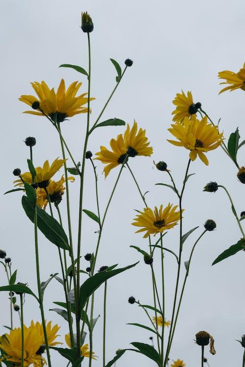 Immagine gratuita di biologia, campo, crescita