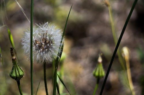 Free stock photo of facebook, flower, garden, good