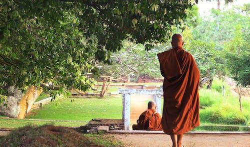 Immagine gratuita di arancia, arancione, Asiatico