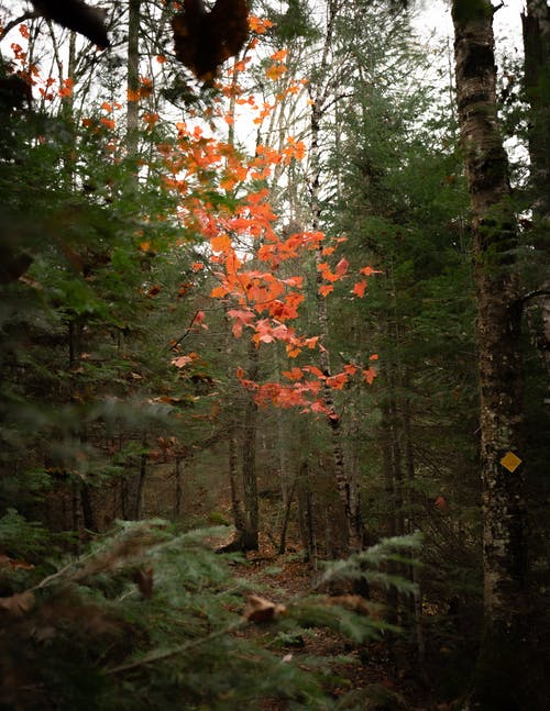 Red and Green Trees in Forest