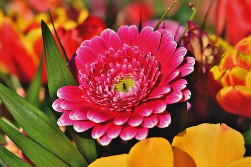 Free stock photo of blooming flowers, flower arrangement, flowerbed