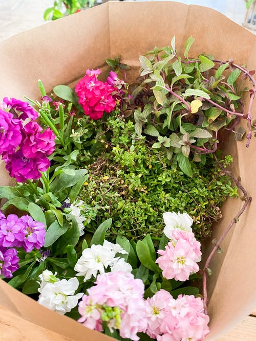 Free stock photo of flowers, plants, plantshop