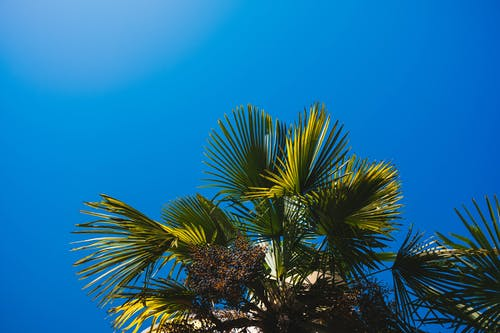 低角度拍攝, 夏天, 天性, 天空 的 免費圖庫相片