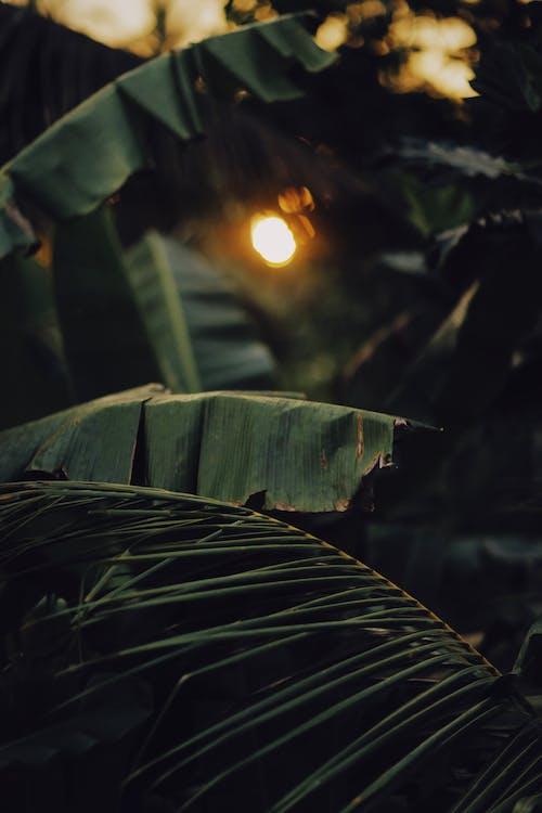 Бесплатное стоковое фото с выборочный фокус, дерево, завод