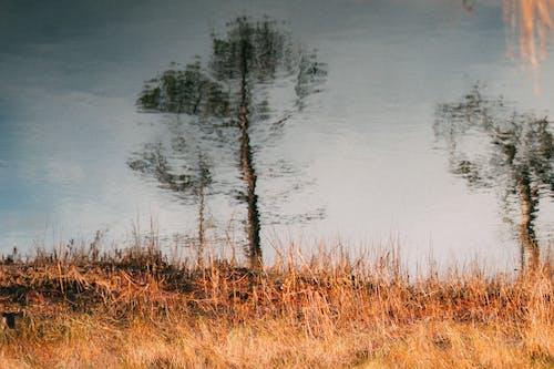 Ilmainen kuvapankkikuva tunnisteilla järvi, kauneus luonnossa, luonto