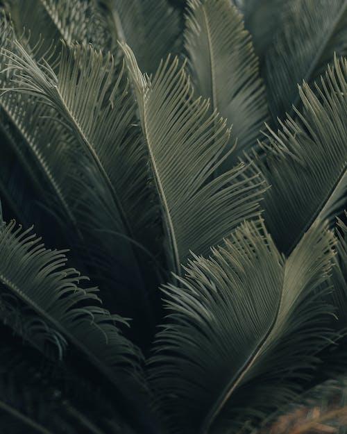 Foto profissional grátis de ao ar livre, botânica, ecológico