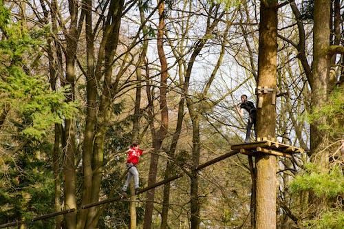 往上爬, 樹木, 爬, 登山者 的 免費圖庫相片