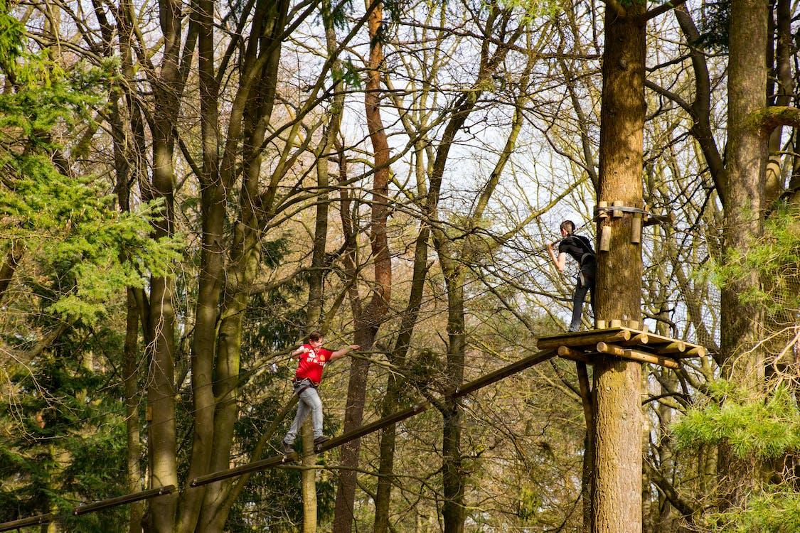 drzewa, wspinać się, wspinacz
