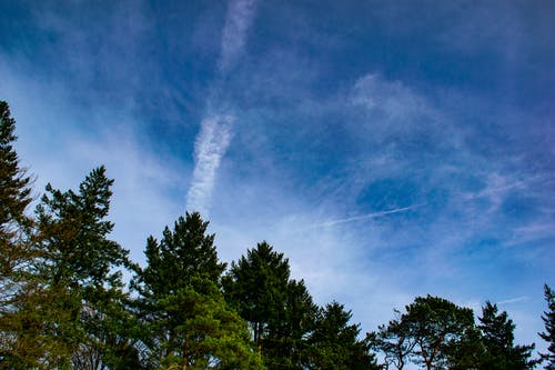 Gratis lagerfoto af blå himmel, klar himmel, skyer, træer