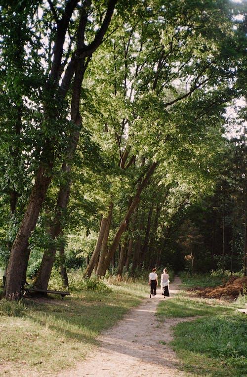 Ingyenes stockfotó erdő, fa, felismerhetetlen témában